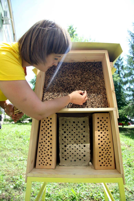 Wymarły miliony pszczół. Winne są mrozy i chemia