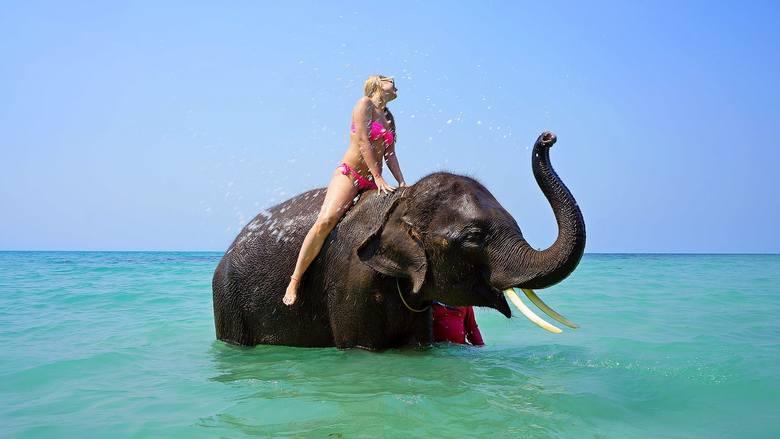 Choć niektóre kierunki kuszą takimi atrakcjami jak np. jazda na słoniu, pamiętaj - decydując się na taką rozrywkę, finansujesz wyzysk zwierząt. To one