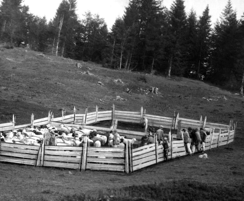 Trzech pasterzy przed wejściem do sałaszu. To właśnie Wołosi, przybysze z Bałkanów, zagospodarowali Karpaty