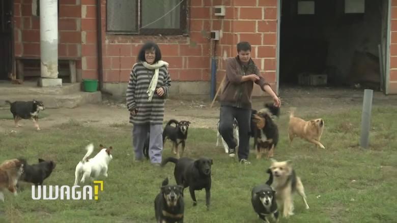 Uwaga! TVN 18.10: Bożena Wahl mieszka z 50 psami. Czy sąd przymusowo umieści sławną malarkę w domu opieki?