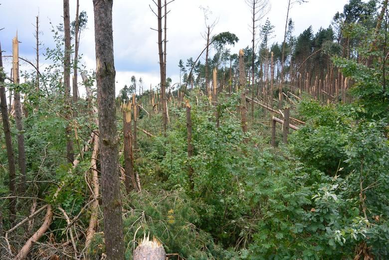 Las był częścią ich życia, miłością i polisą ubezpieczeniową na starość