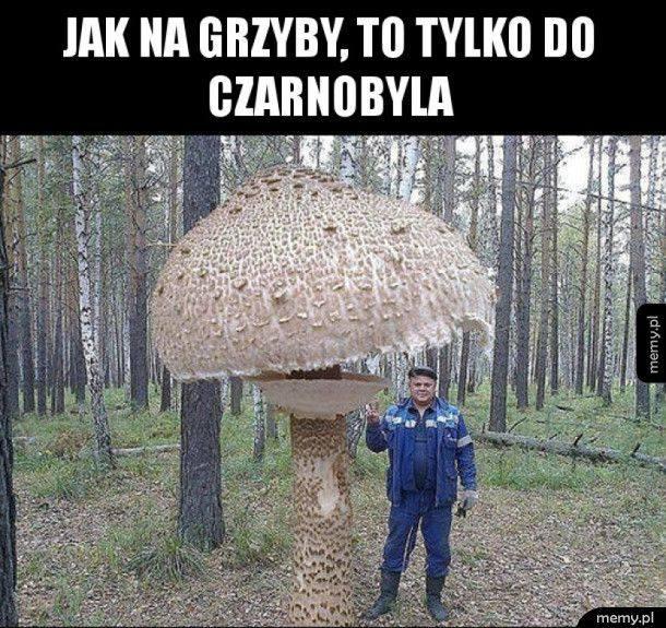 grzyby w styczniu grzybobranie zimą grzyby w lasach zimą grzybiarze memy memy o grzybach