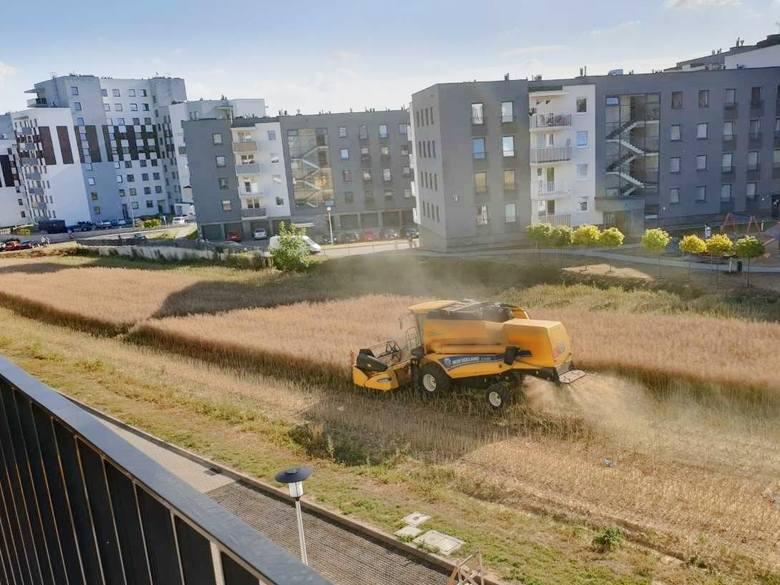 Lublin miejsko-wiejski. Rolnicze widoki w granicach miasta (ZDJĘCIA)