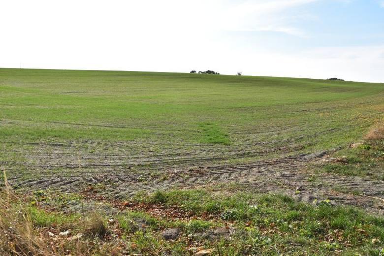 Ziemia rolna ma być nadal użytkowa rolniczo