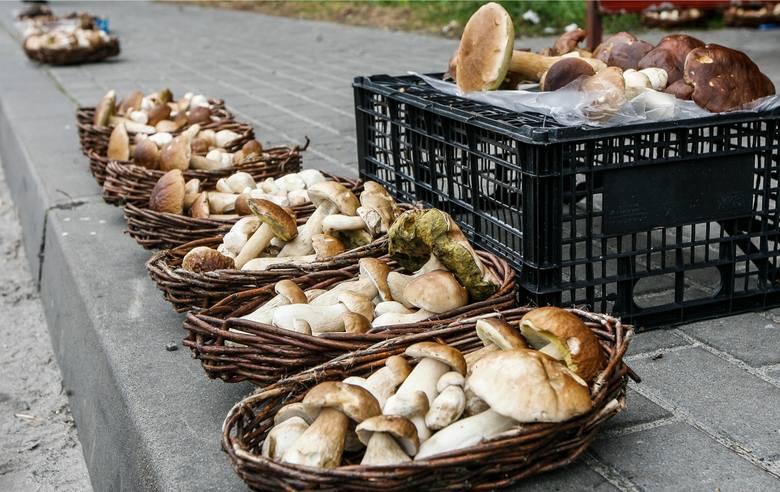 Gdzie na grzyby? Gdzie zbierać grzyby? Gdzie są grzyby 2019? Grzybobranie 2019, grzyby raport 2019