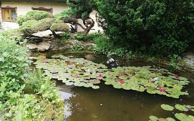 Ogród Botaniczny w Młodzawach.