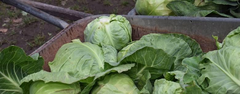 Import warzyw psuje ceny. Zwiebel nie może być polską cebulą, a pietruszka tak droga