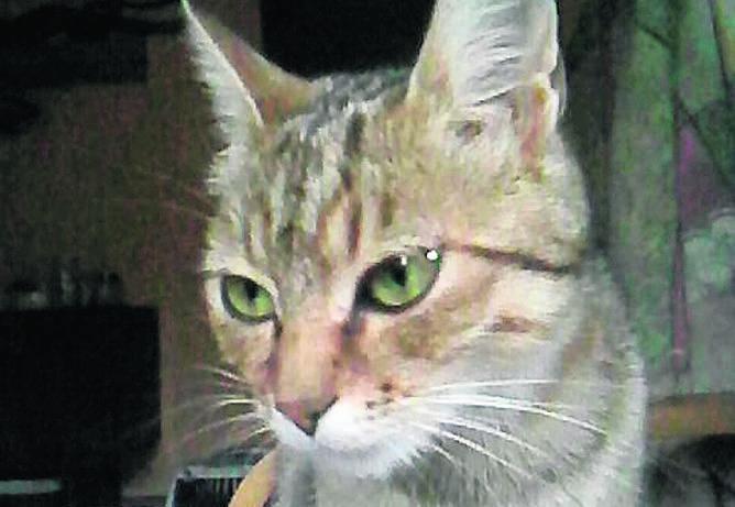 Młodziutka bura kotka poszukuje ciepłego kąta
