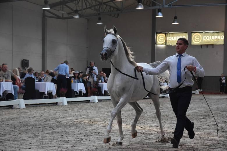 Trudna aukcja koni w Michałowicach. Sprzedane cztery klacze za łączną kwotę 60 tys. euro [ZDJĘCIA]