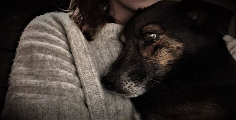 Nowy Tomyśl: Zapadł wyrok za zastrzelenie psa. Mężczyzna trafi do więzienia
