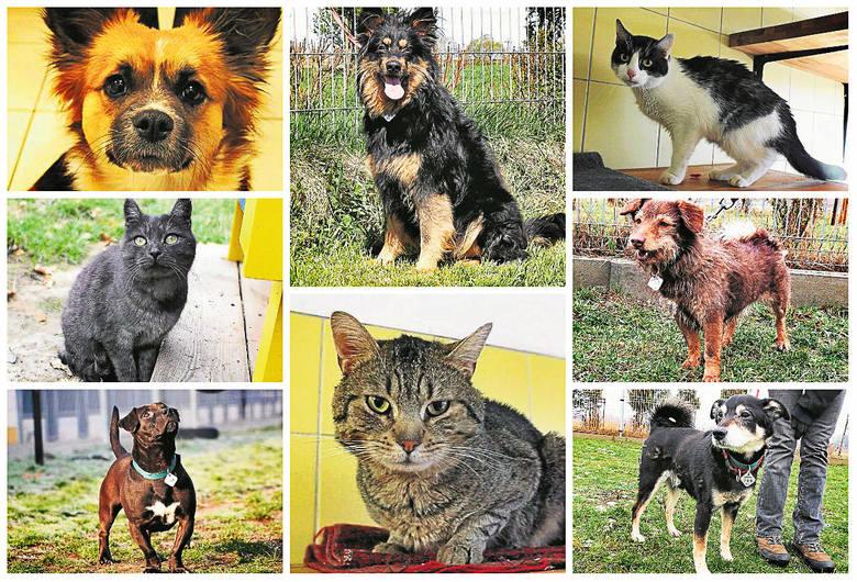 Te psy i koty przebywają w schronisku dla bezdomnych zwierząt we Wrocławiu przy ulicy Ślazowej 2 (tel. 71-362-56-74). Często przeszły wiele. Teraz czekają