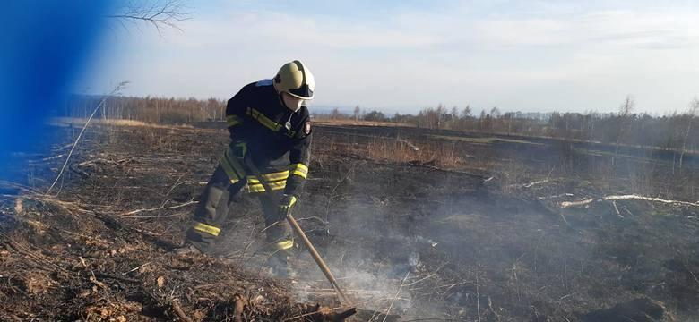 Epidemia pożarów traw. Totalny brak wyobraźni - tak o podpalaczach mówią strażacy