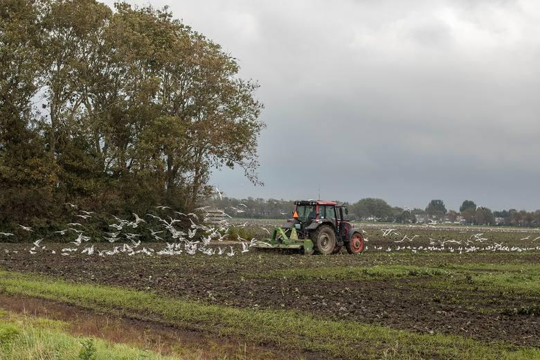 Modernizacja gospodarstw rolnych - nawadnianie - do 22 listopada 2019