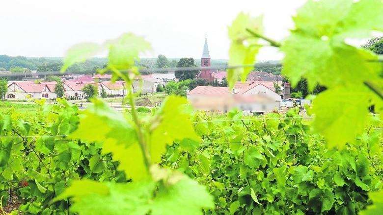 8. Bo ciągle jesteście przekonani, że wzgórza porośnięte winną latoroślą z wieżami kościołów i dachami domów majaczącymi w oddali to Toskania.