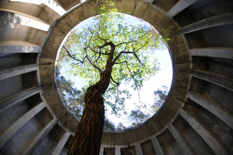Sławę temu lasowi zapewniły tajemnicze, betonowe konstrukcje, które skrywa kilka pagórków. Gdy wchodzimy na ich szczyt otwierają się szare, betonowe