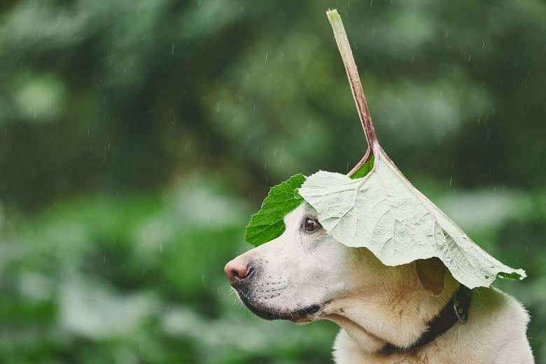Kochasz ogrodnictwo? Podlewasz rośliny łzami? Te MEMY są o tobie