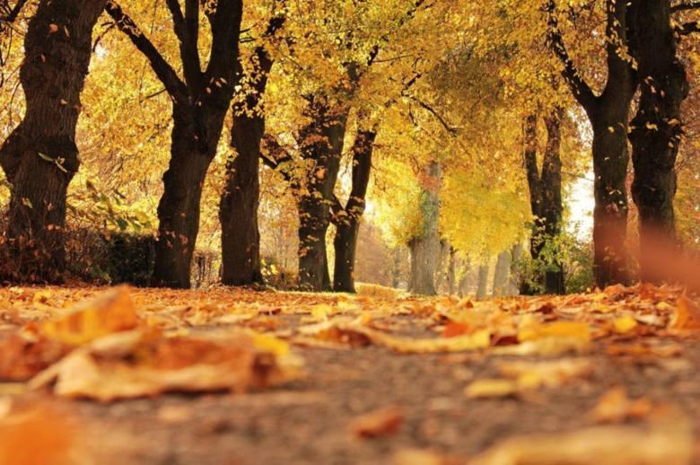 Jak przystało na pierwszą połowę października, za oknami mamy jesienną aurę. Jednak, jak zapowiada Rafał Maszewski, meteorolog i autor serwisu internetowego