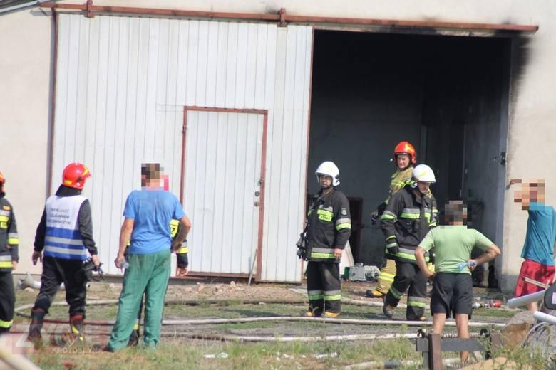 Około godziny 10.30 strażacy odebrali zgłoszenie o pożarze chlewni w miejscowości Chwaliszew pod Krotoszynem. W budynku znajdowało się około 700 świń.