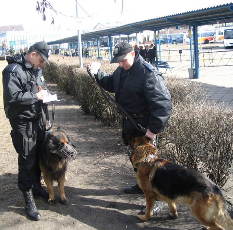 Psy towarzyszą często policjantom podczas patroli. Nawet nie muszą szczekać. Sam ich widok działa na ludzi dyscyplinująco...