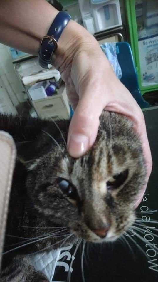 Nie wiadomo kto strzelał do kotki. Ale jej właściciele zapowiadają, że będą szukać sprawcy i udadzą się na policję, gdy tylko dostaną niezbędną dokumentację