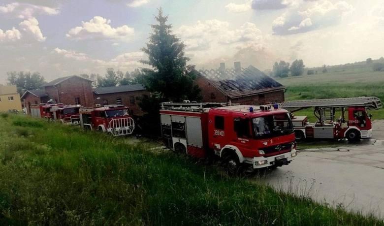 Pożar domu w Uradzie wybuchł w środę, 5 czerwca, o godzinie 13.40. Na miejsce ruszyły wozy strażaków zawodowych ze Słubic oraz OSP Cybinka, Rzepin i