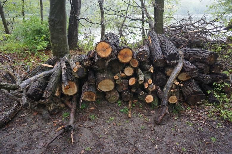 W ostatnich miesiącach z terenów nad jeziorem Rusałka wycięto drzewa. Jak przekonują leśnicy - zgodnie z prawem