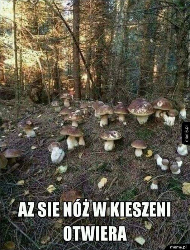 grzybobranie 2021 grzybobranie w lipcu grzybobranie sezon na grzyby
