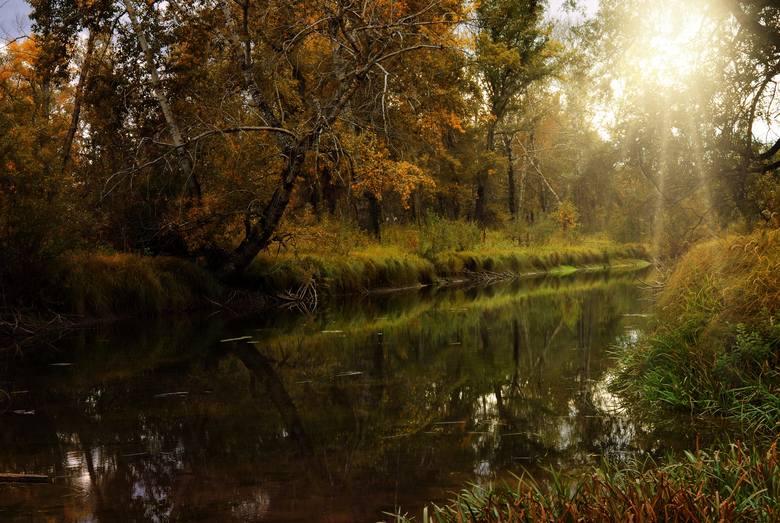 Bóbr uznawany jest za rzekę... górską...<br /> <br /> Bóbr ze swoimi 271,1 kilometrami długości jest największym lewobrzeżnym dopływem Odry. Jego źródła znajdują się<br /> w czeskiej części Gór Izerskich - na zboczach Lasockiego Grzbietu na wysokości 780 m n.p.m. Jej ujście z kolei znajduje...