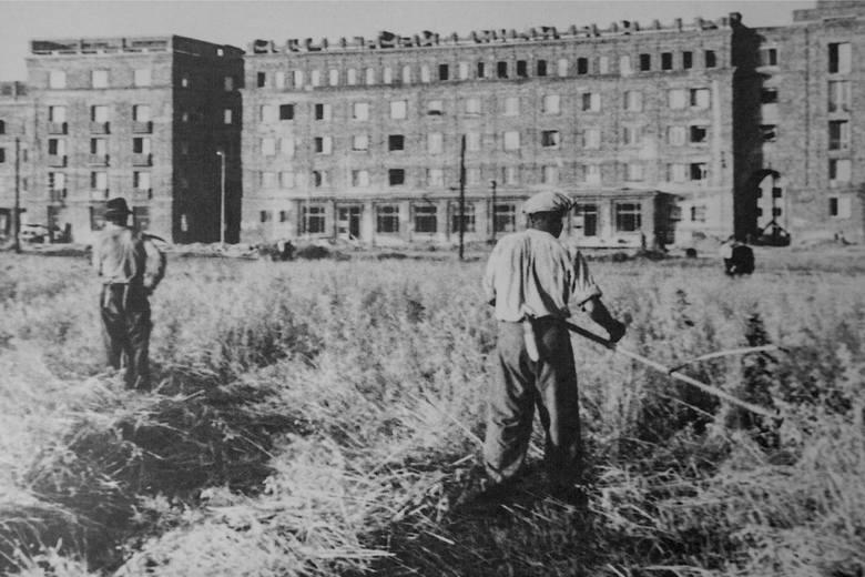 Koszenie traw na łąkach nowohuckich, fot. Michalik