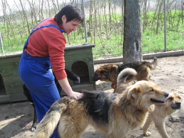 Pod Kostrzynem zrobili raj dla psów  gazetalubuska pl -> Kuchnie Pod Zabudowe Kostrzyn Nad Odra