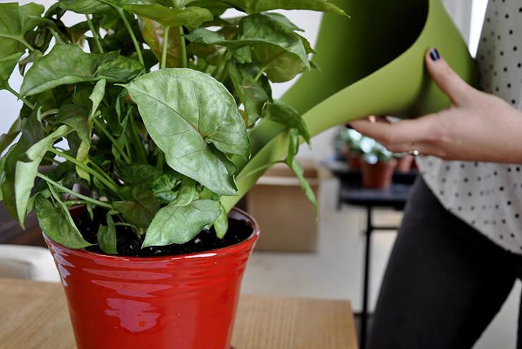 Jeśli Twoje umiejętności związane z hodowlą roślin zamieniają Twoje mieszkanie w mauzoleum botanicznych wpadek... wiedz, że nie jesteś w tym osamotniony.