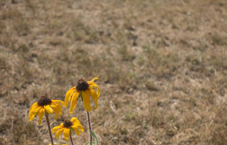 Susza 2020: nowatorski program retencji korytowej poprawi sytuację w rolnictwie