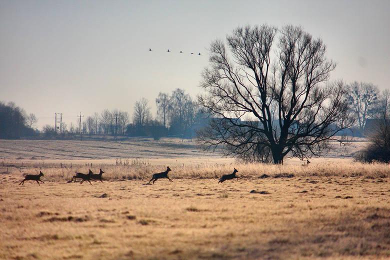 Nasz Czytelnik Franczesko Genneli przesłał nam zdjęcia styczniowych krajobrazów jakie zdołał uchwycić w okolicach Tyniewicz Dużych w gminie Narew