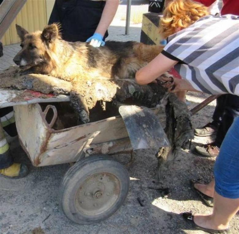 Strażacy przez pięć godzin ratowali psa... uwięzionego w smole!