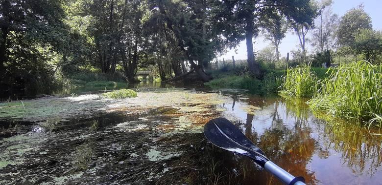 Zielona Chocina to idealna rzeka na pierwszy raz w kajaku, a w każdym przypadku na totalny relaks. Polecamy m.in. dla rodzin z małymi dziećmi. Słaby