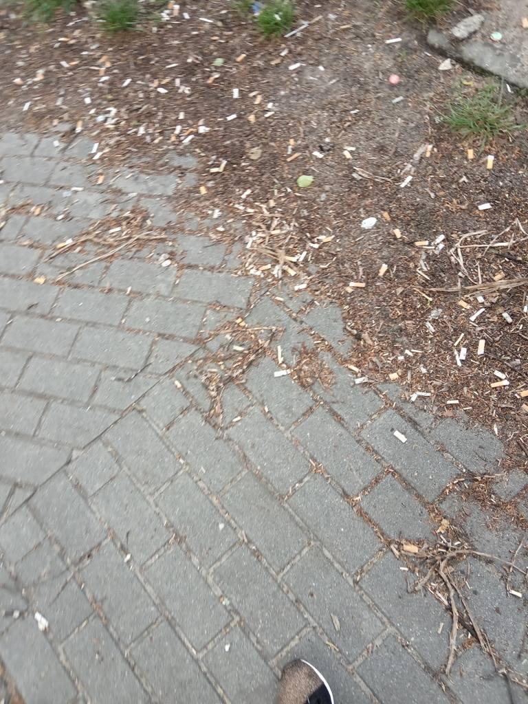 Nasza Czytelniczka wysłała nam takie zdjęcie brudnych chodników w centrum Zielonej Góry.