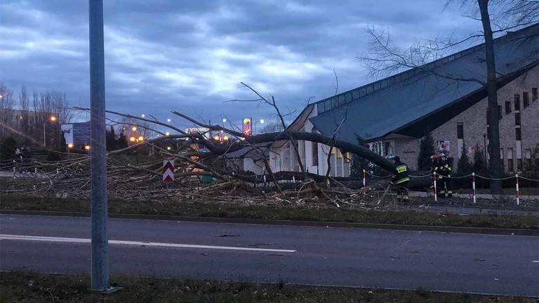 Do zdarzenia doszło w sobotę, 22 lutego, w Zielonej Górze. Silny wiatr powalił wysokie drzewo na ul. Wyszyńskiego. Na miejsce przyjechały dwa zastępy