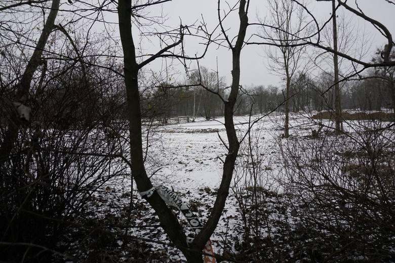 Wycięte drzewa i krzewy stanowiły tzw. potencjalne siedliska, a te zgodnie z prawem nie podlegają ochronie - mówi T. Mizera