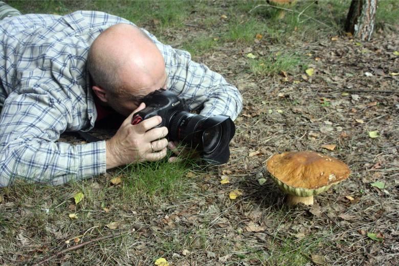 Zbieracie grzyby i chętnie jeździcie na grzybobrania do lasu? Z pewnością zainteresują Was nowe propozycje Polskiego Towarzystwa Mykologicznego, dotyczące