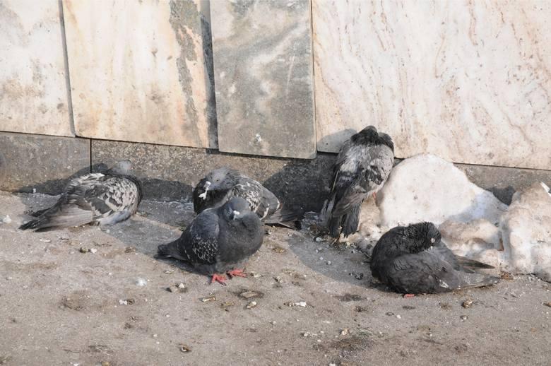 Czy - a jeśli jest taka potrzeba - to czym dokarmiać ptaki?
