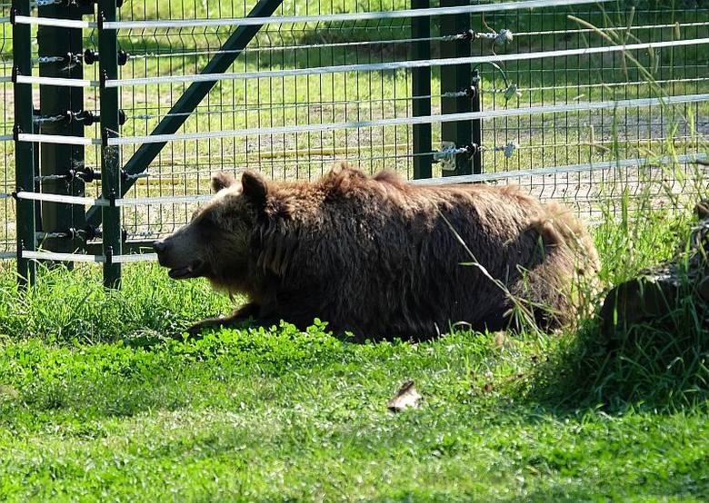 Akcent Zoo w Białymstoku