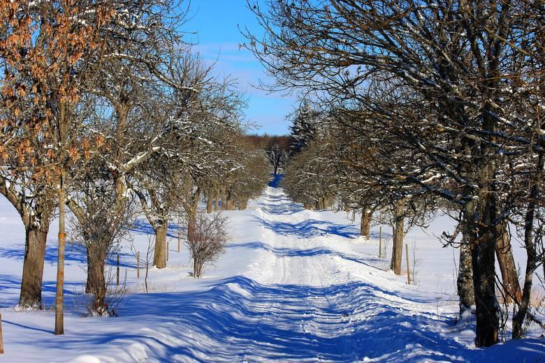 Miniona noc (27 lutego) nie rozpieszczała Lubuszan. Niektórzy mieszkańcy Gorzowa i Zielonej Góry byli mocno zdziwieni, gdy zobaczyli na termometrach