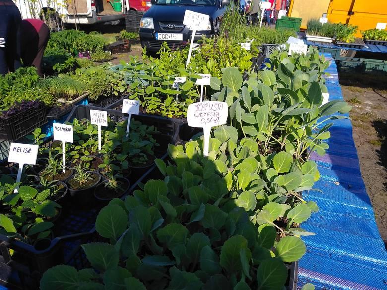 Ceny kwiatów i rozsad na targowisku. Na znów otwartym rynku oblężenie stoisk z roślinami