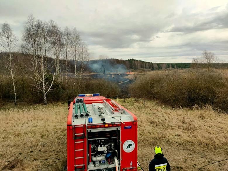 Pożar w Cybince przeobraził się w prawdziwe piekło. Ogień rozprzestrzeniał się błyskawicznie. Spaliły się hektary nieużytków i las