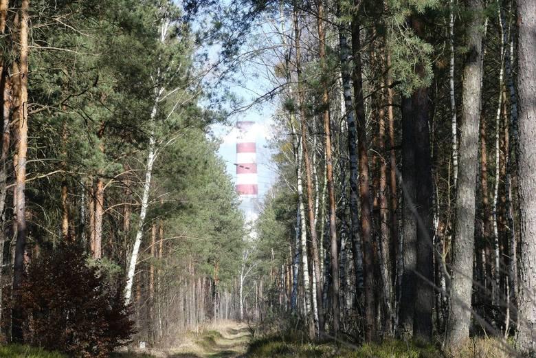 Sąsiadujące z Elektrownią Kozienice lasy leśnictwa Chinów. To właśnie tu miały pojawić się wilki.