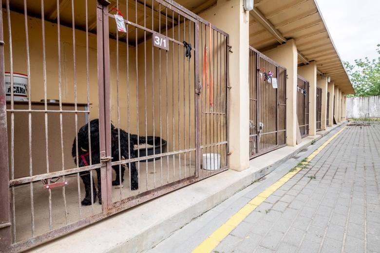Jak informuje Agata Szarata, kierowniczka poznańskiego schroniska dla zwierząt w stolicy Wielkopolski nie odnotowano zwiększonej liczby porzuceń zwierząt. - Mieszkańcy jednak dzwonią i pytają, co mogą zrobić w przypadku kwarantanny lub zakażenia. Radzimy im, by prosili o pomoc swoje rodziny,...