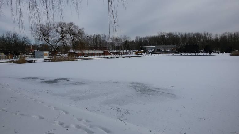 Świętochłowice: Zima zawitała nad staw Skałka [ZDJĘCIA]