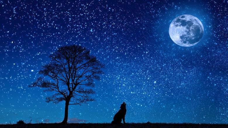 Sprawdź nasz horoskop na dziś. Horoskop dzienny przygotuje Cię na niespodzianki. Sprawdź swój znak zodiaku i horoskop na sobotę 20 października 2018