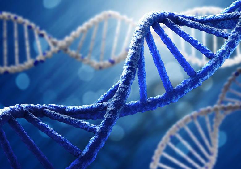 Geny mają bardzo duży wpływ na nasz wygląd, zachowanie, osobowość, a także inteligencję. W zestawie genów przekazanych nam przez rodziców zapisanych