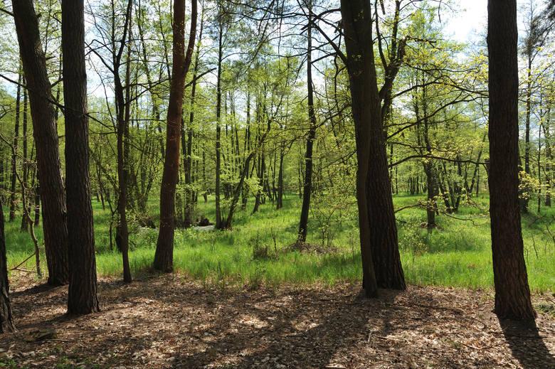 Lasy potrzebują więcej wody